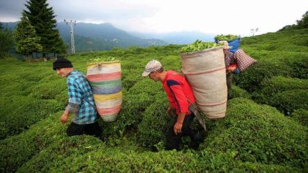Tüm Köy Sen ve Gıda-İş'ten ortak açıklama: Üreticiye yasak kabul edilemez