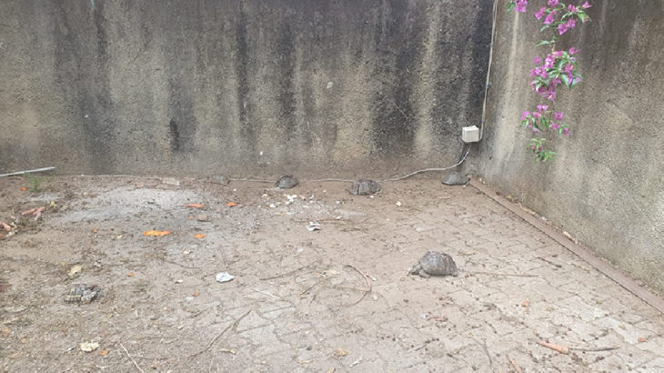 Antalya Alanya'da kaplumbağalar öldürülmüştü: