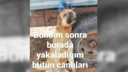 Erzincan'da römorka asılı köpek fotoğrafı paylaşan şahıs gözaltına alındı