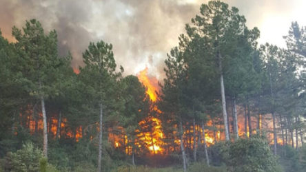 Kütahya ve Muğla'da orman yangınları