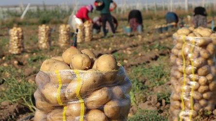 'Tonlarca soğan ve patates çürüyüp atılmayı bekliyor'