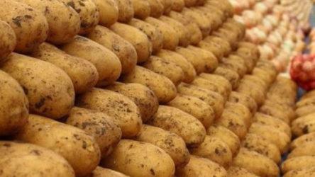 Mısır'dan ithal patatesler, üretimin en çok olduğu Niğde'ye getirildi