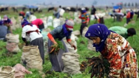 Tarım ürünleri üretici fiyatlarındaki artışta zirve