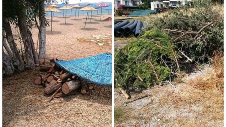 Bodrum'da 'sosyal mesafe' katliamı: Sahili genişletmek için ağaçları kestiler