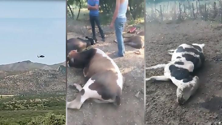 Diyarbakır'da köylülere darp ve hayvanlara helikopterli saldırı Meclis gündeminde