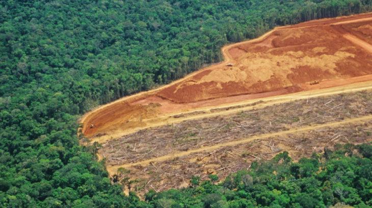 Her altı saniyede bir futbol sahası kadar orman yok oldu