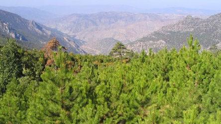 Eskişehir'de 200 bin ağacı yok edecek projeye karşı çağrı
