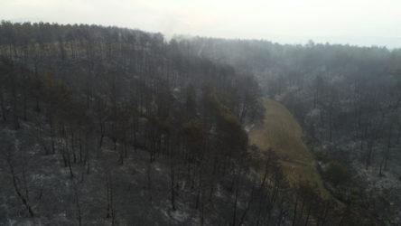 Gelibolu'da yangının boyutu gün ağarınca ortaya çıktı