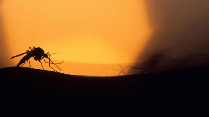 Koronadan sonra dang humması: En az 14 bin vaka