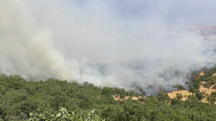 Lice'de orman yangını