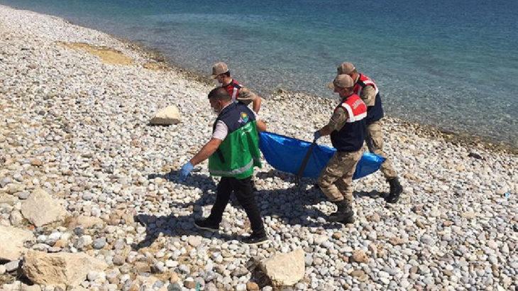 Van Gölü'nden çıkarılan ceset sayısı 60'a yükseldi