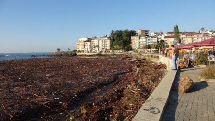 Selde sürüklenen ağaçlar sahil şeridini kapladı