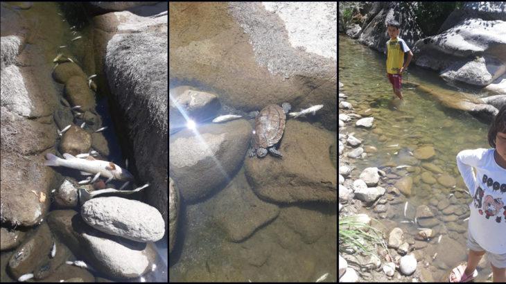 Kazdağları'nın eteklerinde toplu canlı ölümleri