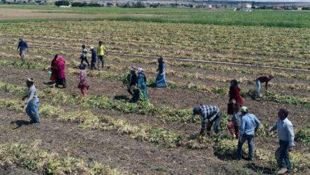 Düzce'de 95 mevsimlik tarım işçisi karantinada