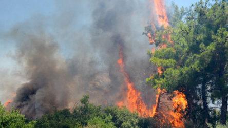 İçişleri Bakanlığı'ndan valiliklere orman yangınları genelgesi
