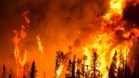 İzmir Bergama'da orman yangını