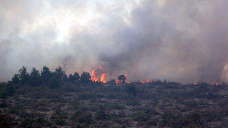 Bolu'da ormanlık alanda yangın