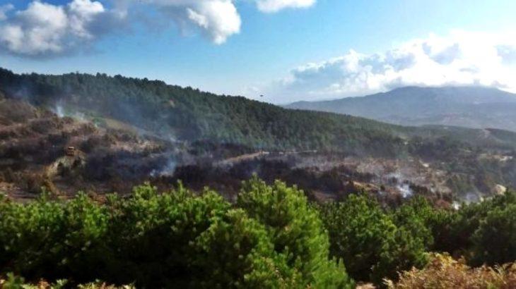 Bergama ve İvrindi'deki orman yangınında 100 hektar alan kül oldu