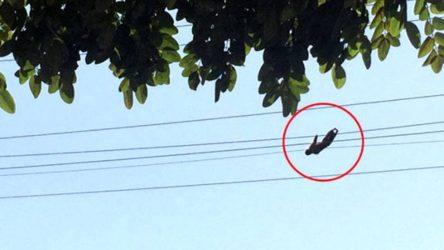 Hayvanat bahçesinden kaçan maymun elektrik akımına kapıldı