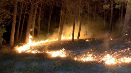 Düzce Yığılca'da orman yangını