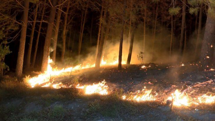 Pendik'te orman yangını: Lodos nedeniyle alevler kısa sürede büyüdü