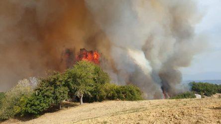 Osmaniye'de ormanlık alanda yangın