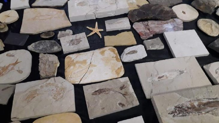 Oktar'ın fosilleri müzeye gönderildi