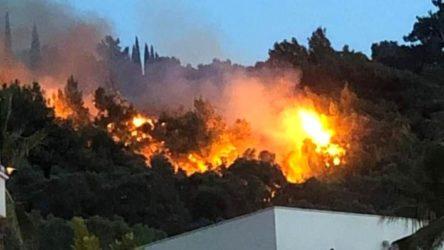 Aydın Söke'de zeytinlik ve ormanlık alanda yangın