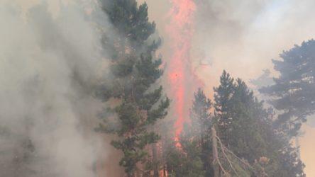 Gebze'de orman yangını