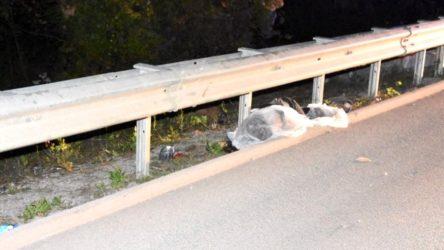 Sinop'ta otomobilin çarptığı yaya hayatını kaybetti