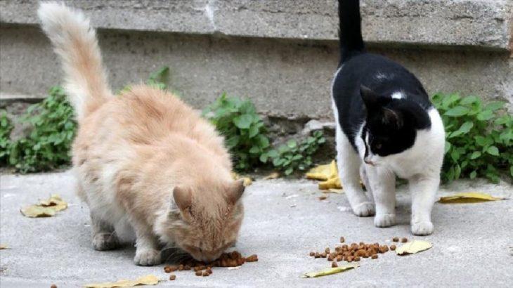İddia: Topkapı Sarayı'nda personele 'sokak hayvanlarını beslemeyin' talimatı verildi