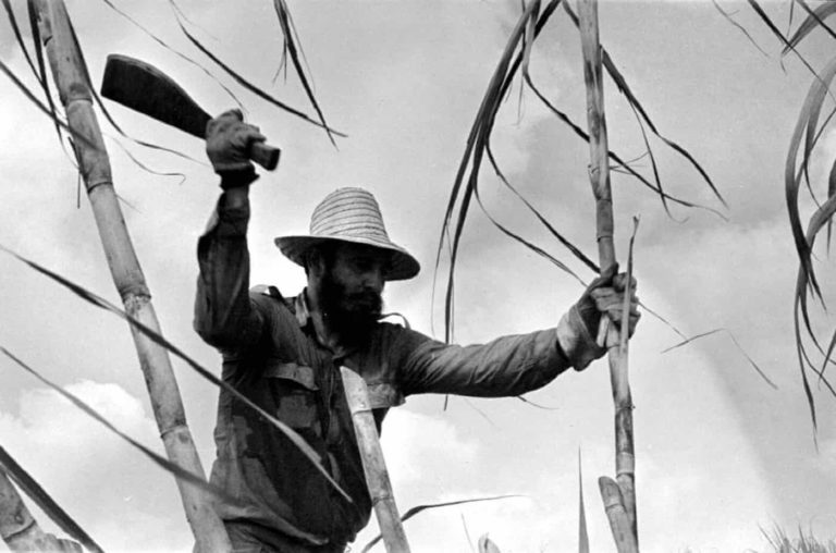 Fidel, şeker kamışı keserken. 1970