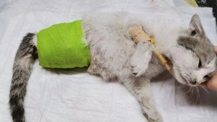 Diyarbakır'da patileri kesilmiş halde bulunan kedi kurtarılamadı