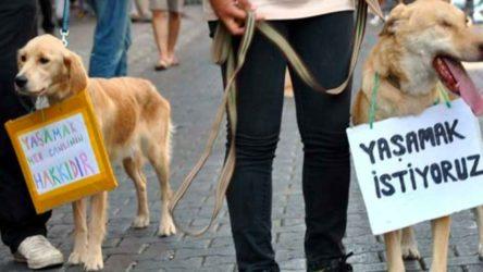 Antalya'da bir kedi daha bacakları kesilerek öldürüldü