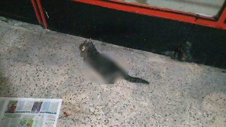 Gölcük'te 4 bacağı kesilmiş kedi ölü bulundu