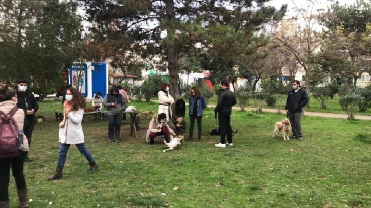 İzmit'te köpekleri öldürenler belediye personeli çıktı
