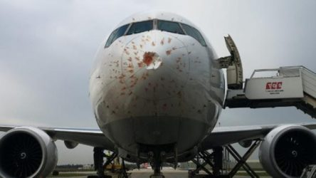 Kuş sürüsüne giren THY kargo uçağı acil iniş yaptı