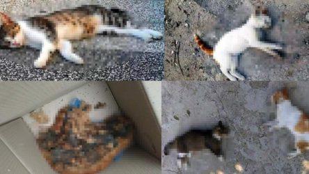 13 sokak hayvanı zehirlenerek öldürüldü