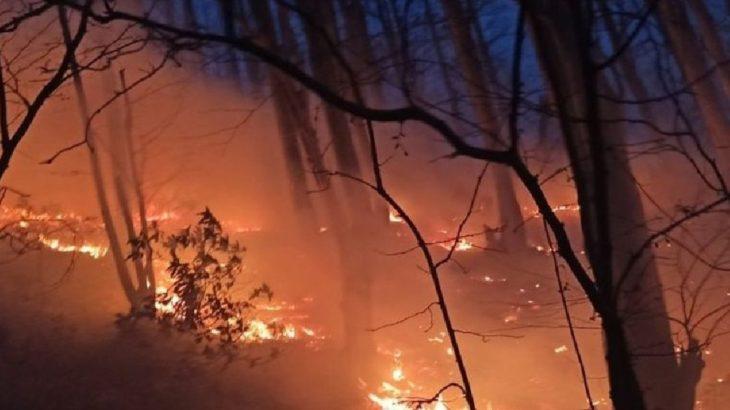 Türkiye'de 2020 yılında 29 bin 487 futbol sahası büyüklüğündeki ormanlık alan yandı