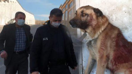 Tüfekle köpeği vuran şahsın pişkinliği: Gören de adam öldürdük sanır