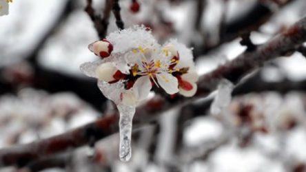 Meteoroloji'den bazı iller için zirai don uyarısı