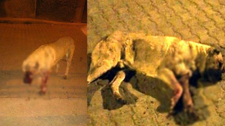 Mersin'de sokak köpeğinin gözlerini oyup öldüresiye dövdüler