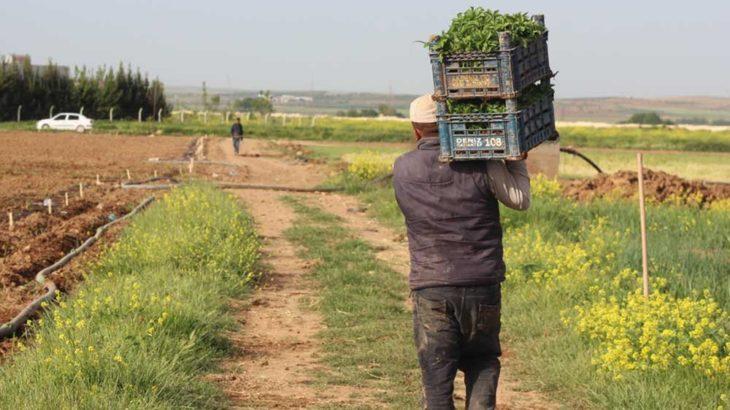 Çiftçi isyan etti: 30 kuruşa sattığımız mahsul marketlerde 3 buçuk lira
