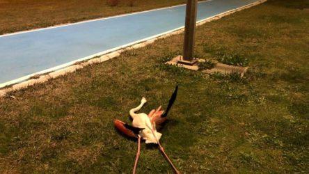 İzmir Bayraklı sahilinde cansız halde bulunan flamingoların ölüm nedeni araştırılıyor