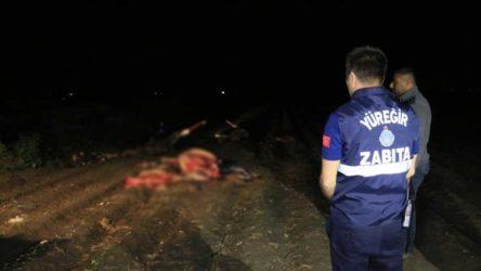 Kayıp atlar tartışılırken... Adana'da tarlada kesilmiş 3 at bulundu