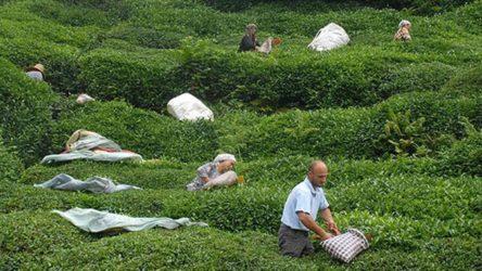 300 kişilik mevsimlik işçi alımına, 35 bin 412 başvuru!