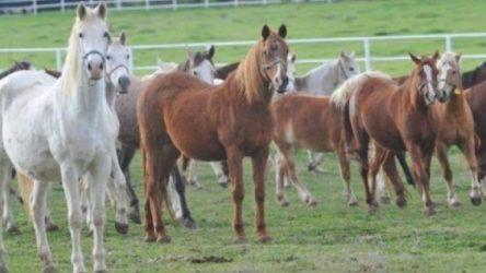 'Kayıp atlar' olayında Ülkü Ocakları iddiası