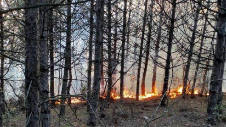 Tekirdağ Şarköy'de şüpheli orman yangını: 5 noktada aynı anda 'yangın çıktı'