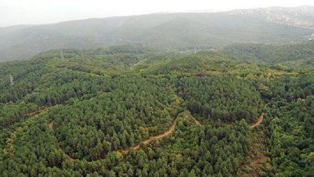 Erdoğan imzaladı: Ormanlar talana açılıyor