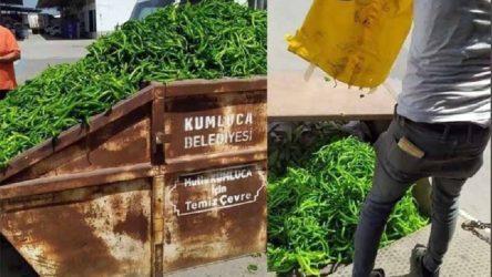 Tarım üreticileri tonlarca sebzeyi 'para etmediği' için çöpe döktü